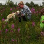 Picking Fireweed